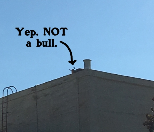Yeah. Nope. Not a bull. Just a bull-shaped piece of rooftop equipment. So sad this isn't a bull statue. We NEEDED this to be a bull statue.