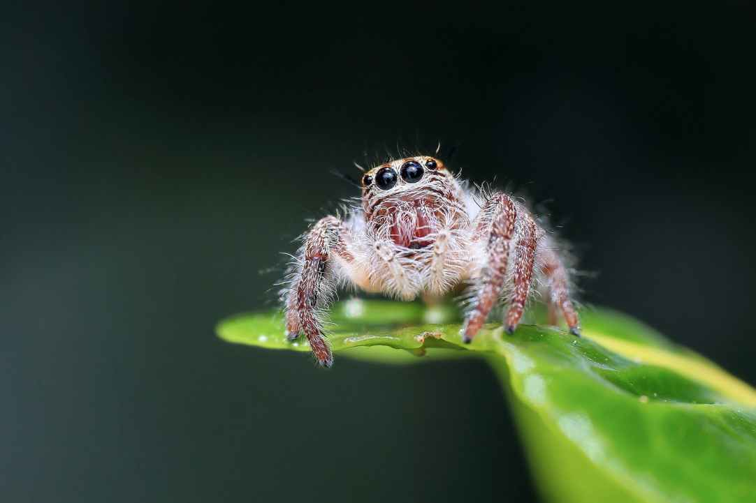 """Sad floofy spider asks """"Why you so scurred of me?"""""""